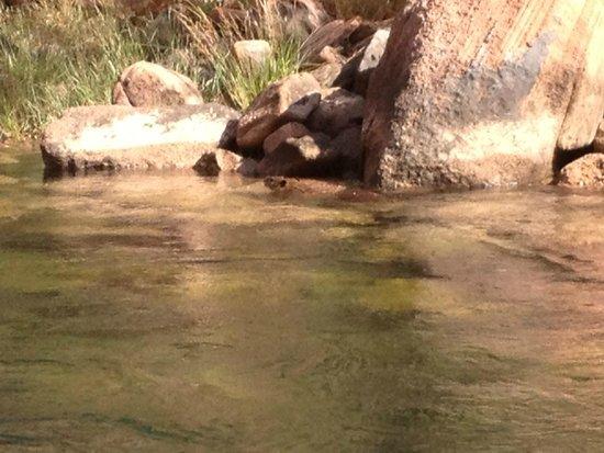 Colorado River Discovery: Beaver
