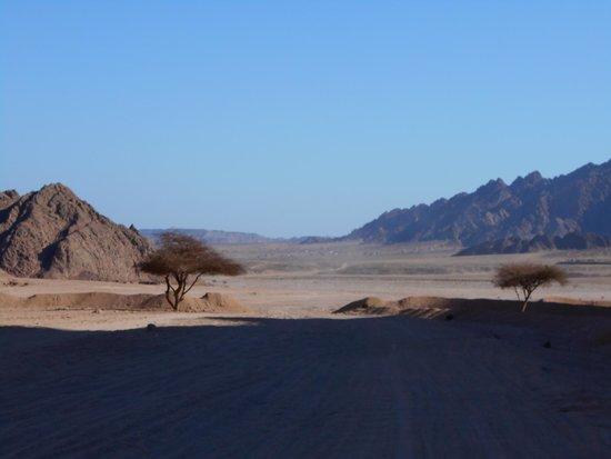 Sharm Grand Plaza : Desert