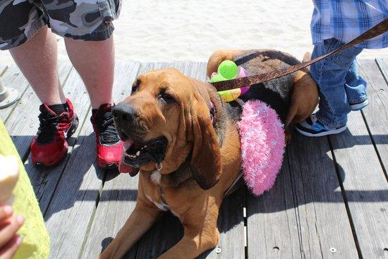 Ocean City Boardwalk: Doo-Dah Parade