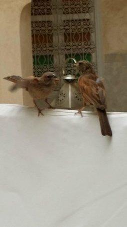 AnaYela: bfast w birds