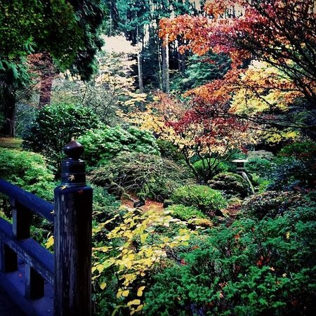 Portland Japanese Garden: Fall colors