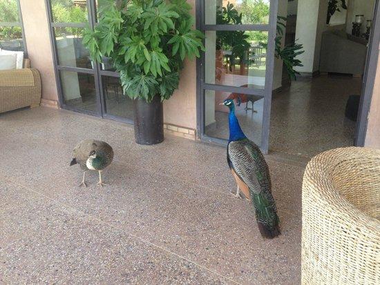 Ecolodge Quaryati : Peacocks