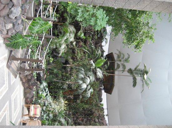 Hotel THe Volcán Lanzarote: Végétation de la réception
