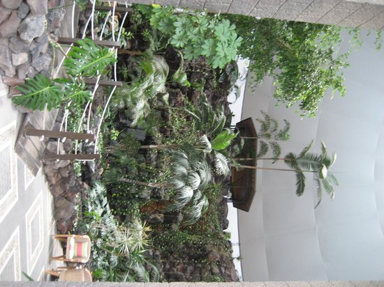 Hotel THe Volcan Lanzarote : Végétation de la réception
