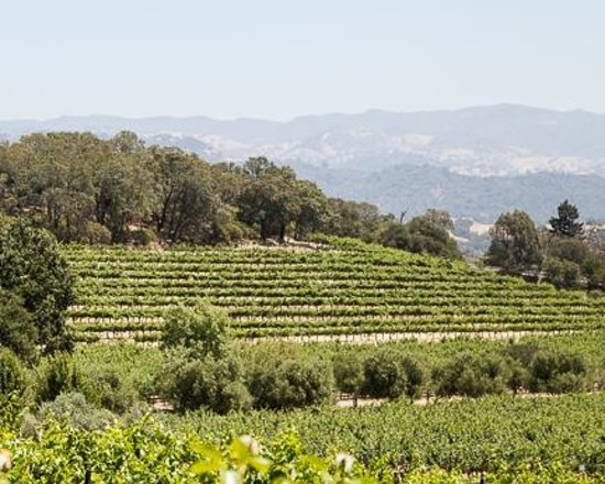 Francis Ford Coppola Winery: View of the vineyards