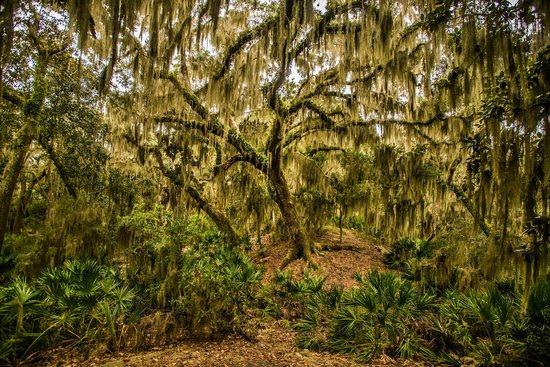 The Lodge on Little St. Simons Island: Live Oak Draped in Moss
