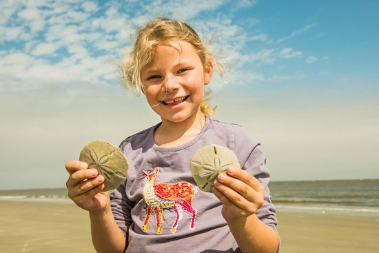 The Lodge on Little St. Simons Island: Sand Dollars Found on the Beach