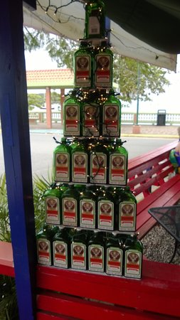 Lazy Jacks: Jager Tree leftover from the Chrismas Holidays