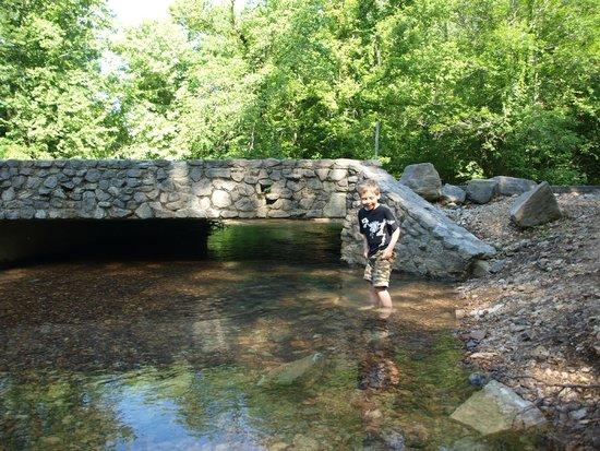 Mousetail Landing: Creek