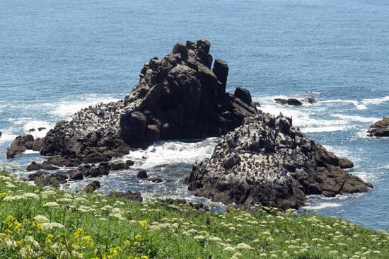Yaquina Head Outstanding Natural Area: Nesting rocks below Yaquina Head Lighthouse