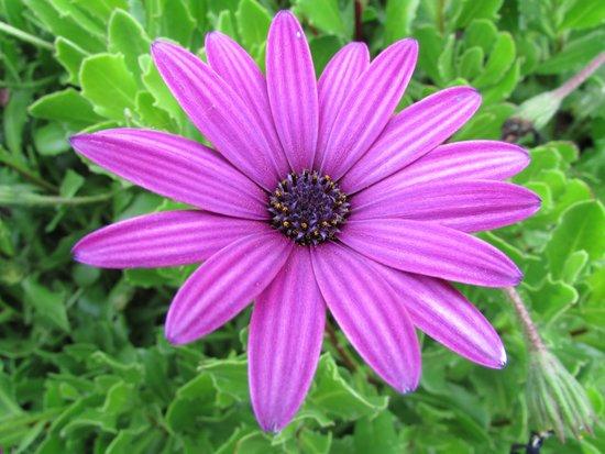 St. Michael's Mount: a purple flower