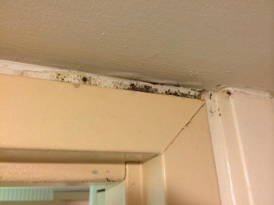 Suburban Extended Stay Hotel, Omaha : Mold in bathrooms