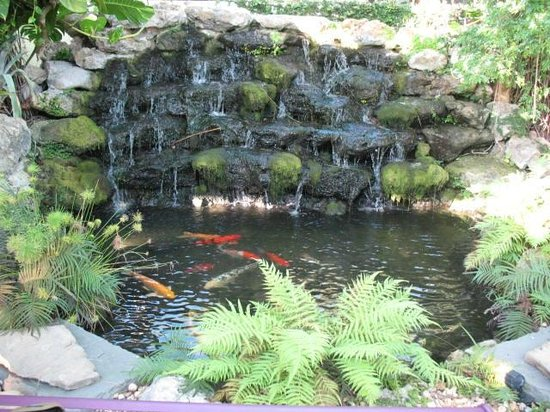 Almond Tree Inn: Hotel fish pond