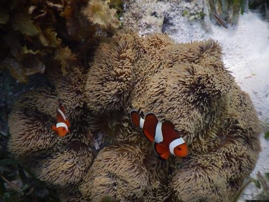 Malcapuya Island: cute
