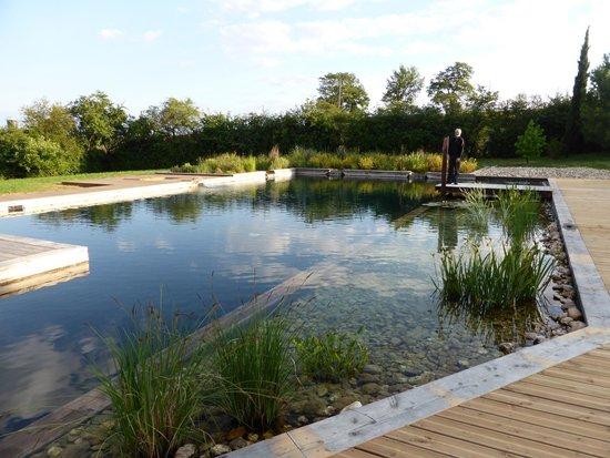 Chateau de Ronel: Stunning organic pool