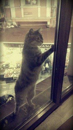 Cumhuriyet Meyhanesi : Кошка умоляла открыть окно и пустить ее