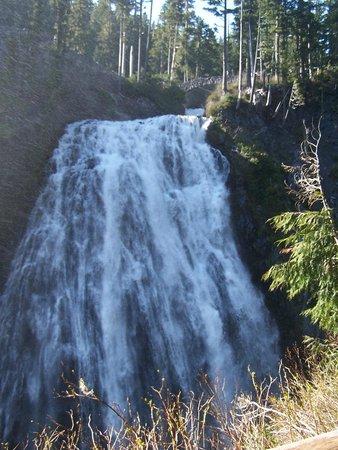 Mount Rainier : Bottom of narada Falls