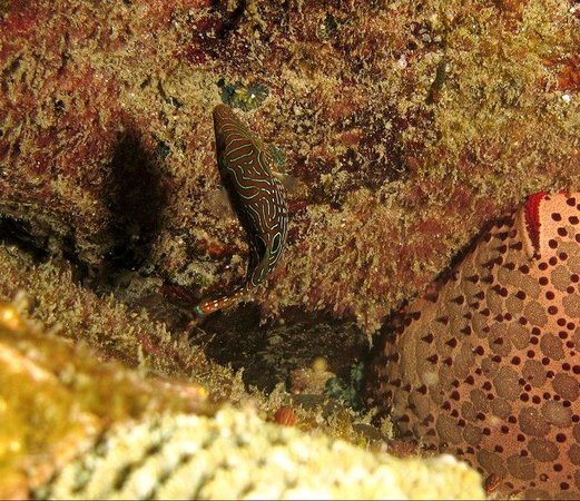 Pigeon Island View Beach Guest House : Sea life of Tricomalee