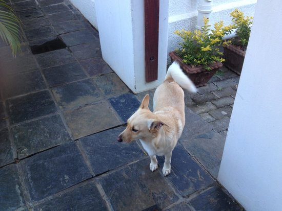 Flametree Guesthouse : The adorable dog of the house