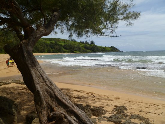 Kauai Photo Tours : Moloa'a Beach, Kaua'i