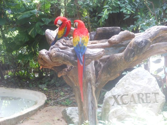 Xcaret Eco Theme Park: Birds