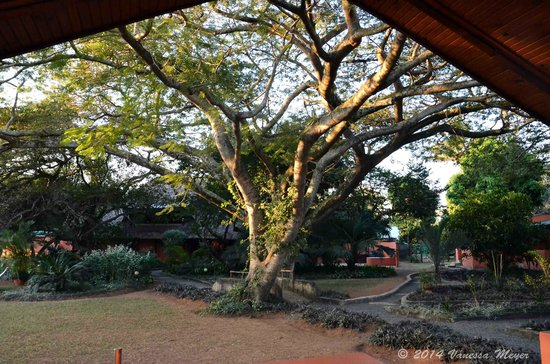 Bushbaby Lodge & Camping: View from veranda