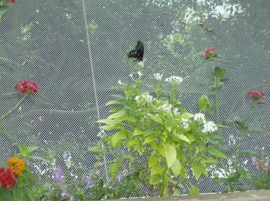 Moody Gardens: Butterfly exhibit