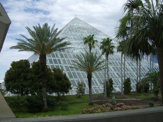 Moody Gardens: Rainforest