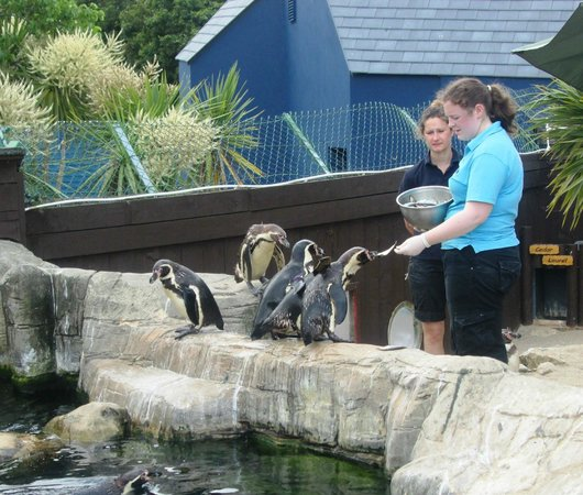Weymouth SEA LIFE Adventure Park: Sea Life Penguin feeding