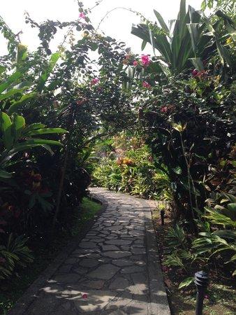 Nayara Resort Spa & Gardens: Everywhere you walk you will want to take a photo. So Gorgeous!