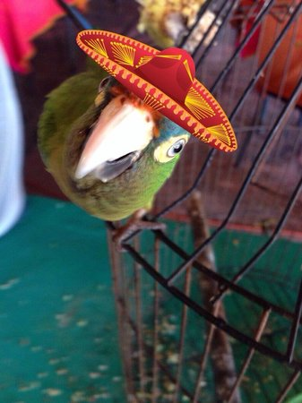 Miguel Angel : Of course I added the hat