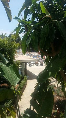 Sentido Tucan: VIEW FROM MY ROOM