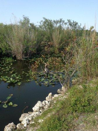 Anhinga Trail: Classic Everglades