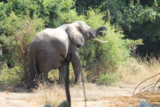 Marula Lodge: Watching elephants near the grounds