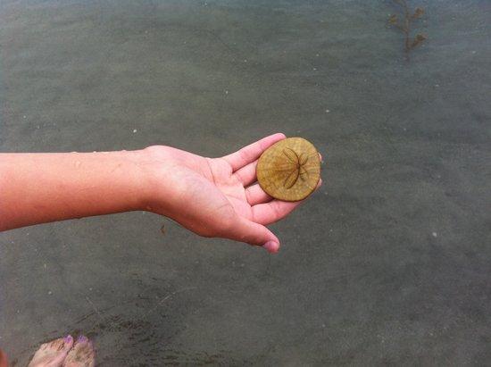Hotel del Coronado: Golden sand dollars my daughter found