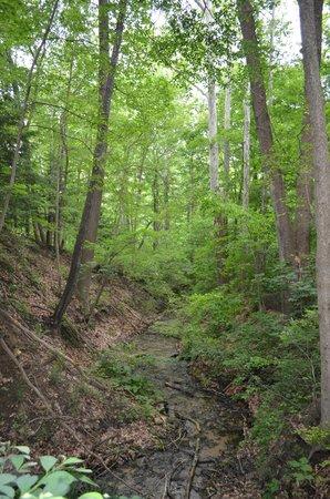 Trails Picture Of Fernwood Botanical Garden And Nature Preserve Niles Tripadvisor