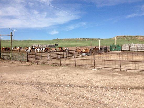 Colorado Cattle Company: Gathering horses