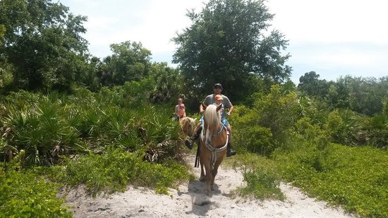 Sun City Stables : happy trails