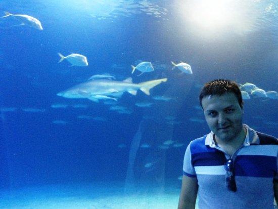 Oceanografic: Oceanographic Valencia