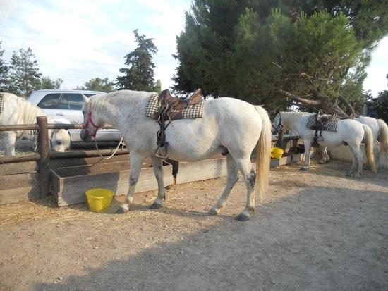Promenade à cheval, Chez Elise : les chevaux