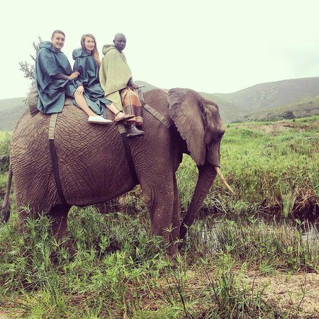 Botlierskop Private Game Reserve : Elephant Riding