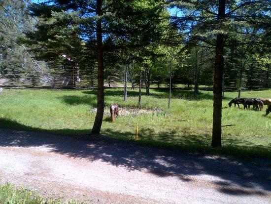 Grail Springs Retreat: Down by water