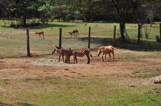 Nairobi Safari Walk: Zoo
