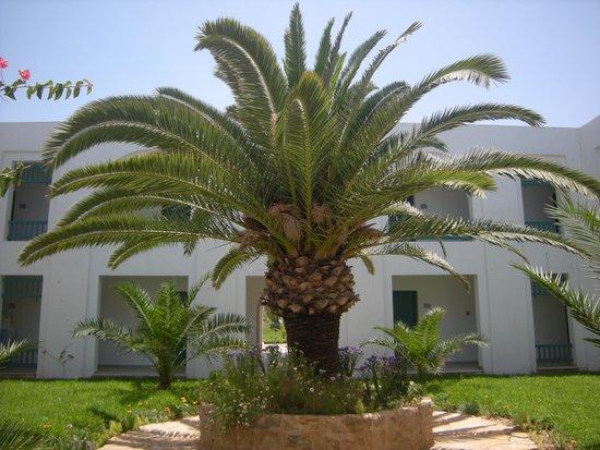 Vincci Helios Beach : jardin