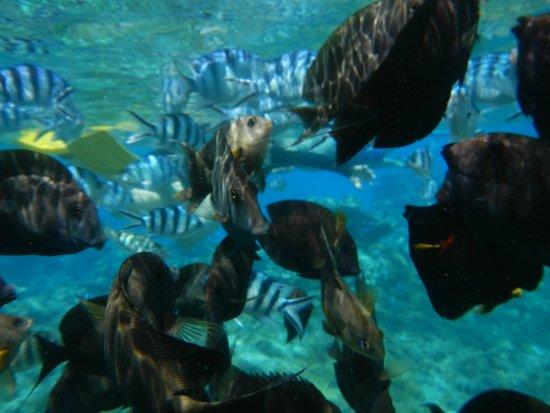 Maohi Nui : Snorkeling in Bora Bora