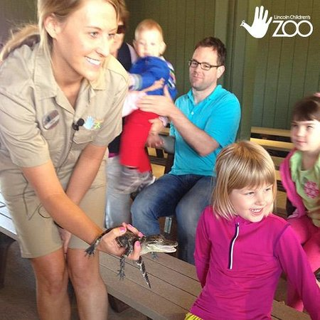 Baby Alligator at Lincoln Children's Zoo's Animal Encounter Stage