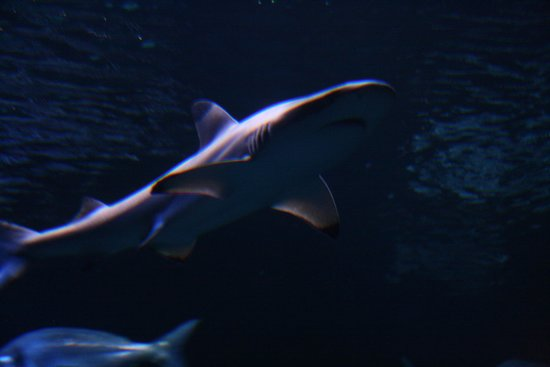 Palma Aquarium : Shark Attack