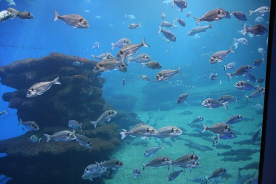 Palma Aquarium : Large Tanks