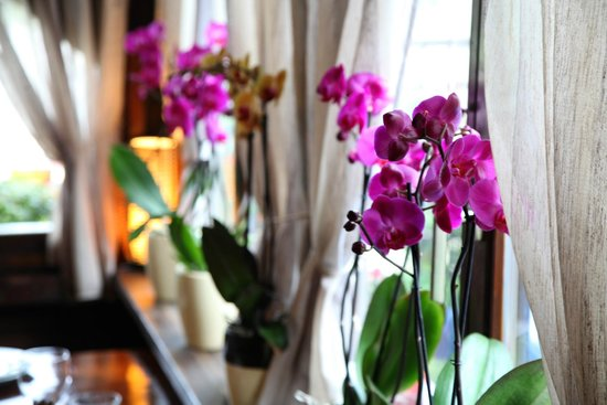 Lozovac, Croatie : Orchids in our tavern