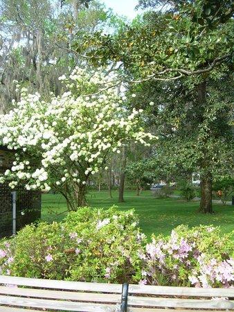 Forsyth Park: Blooms abound